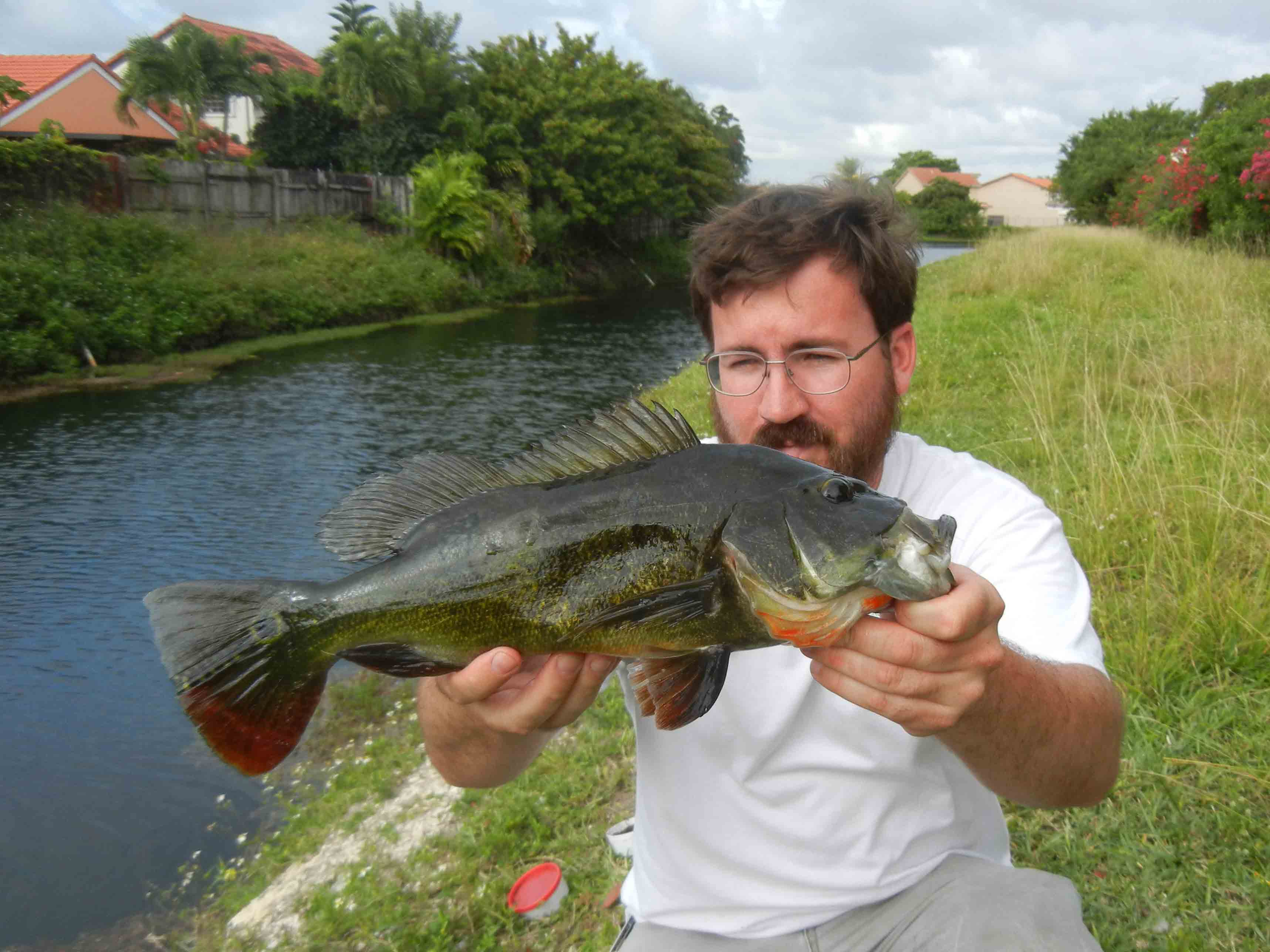 Freshwater jewel fish - Author With A Peacock Bass Caught On A Small Jewel Cichlid