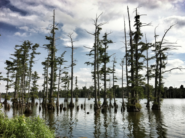 Cypress Swamp in Indiana